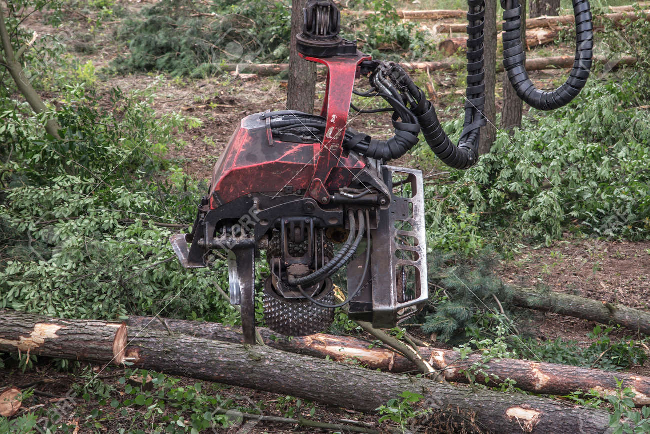 forestry harvester during a job among trees in the forest - 160160116