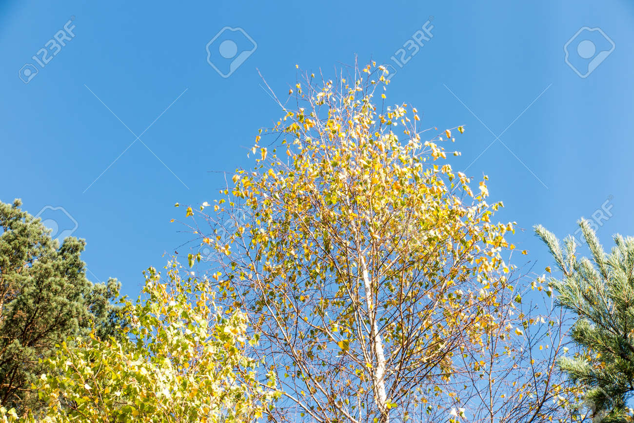 Autumn in a mixed, deciduous and coniferous forest - 157852255