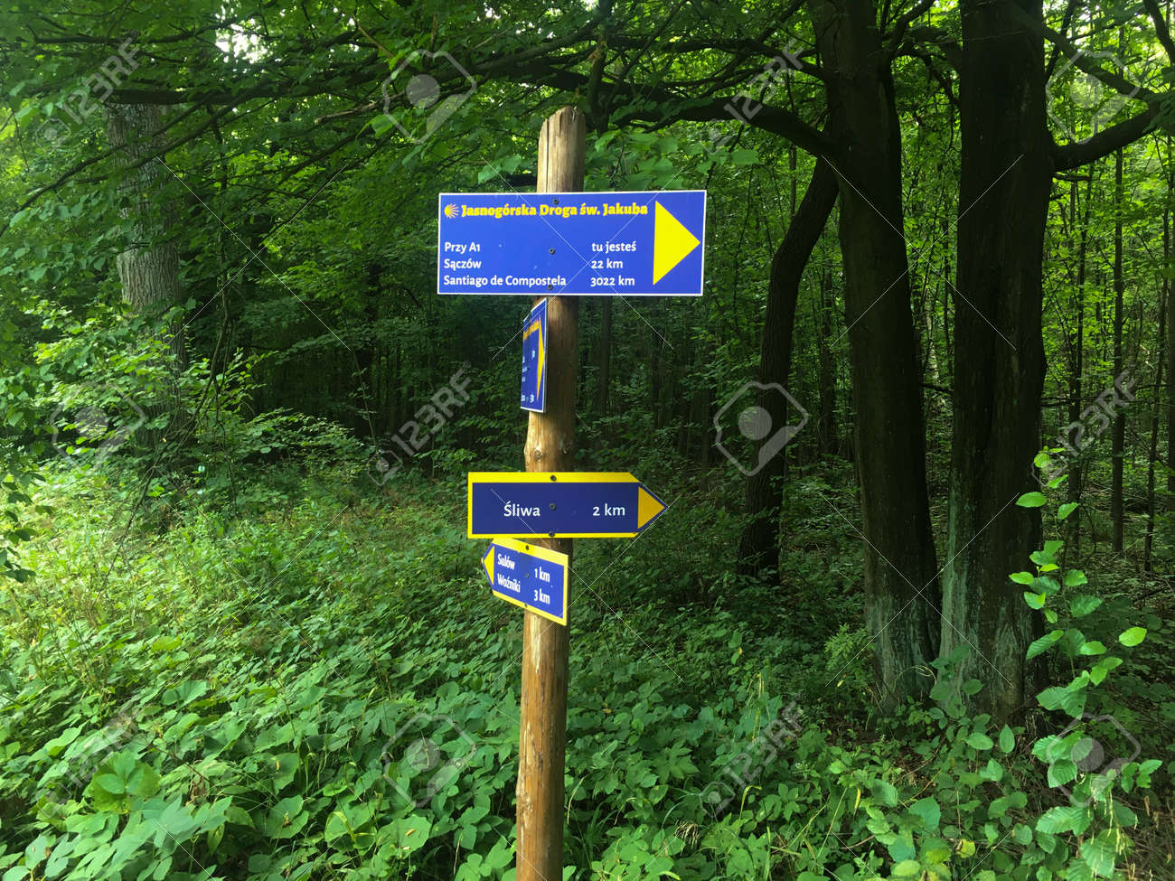 """Camino de Santiago pilgrimage route leading to the cathedral in Santiago de Compostela in Galicia, north-west Spain, """"Jasnogorski"""" fragment near Czestochowa Poland visible route marking at the crossroads of forest roads - 157852319"""