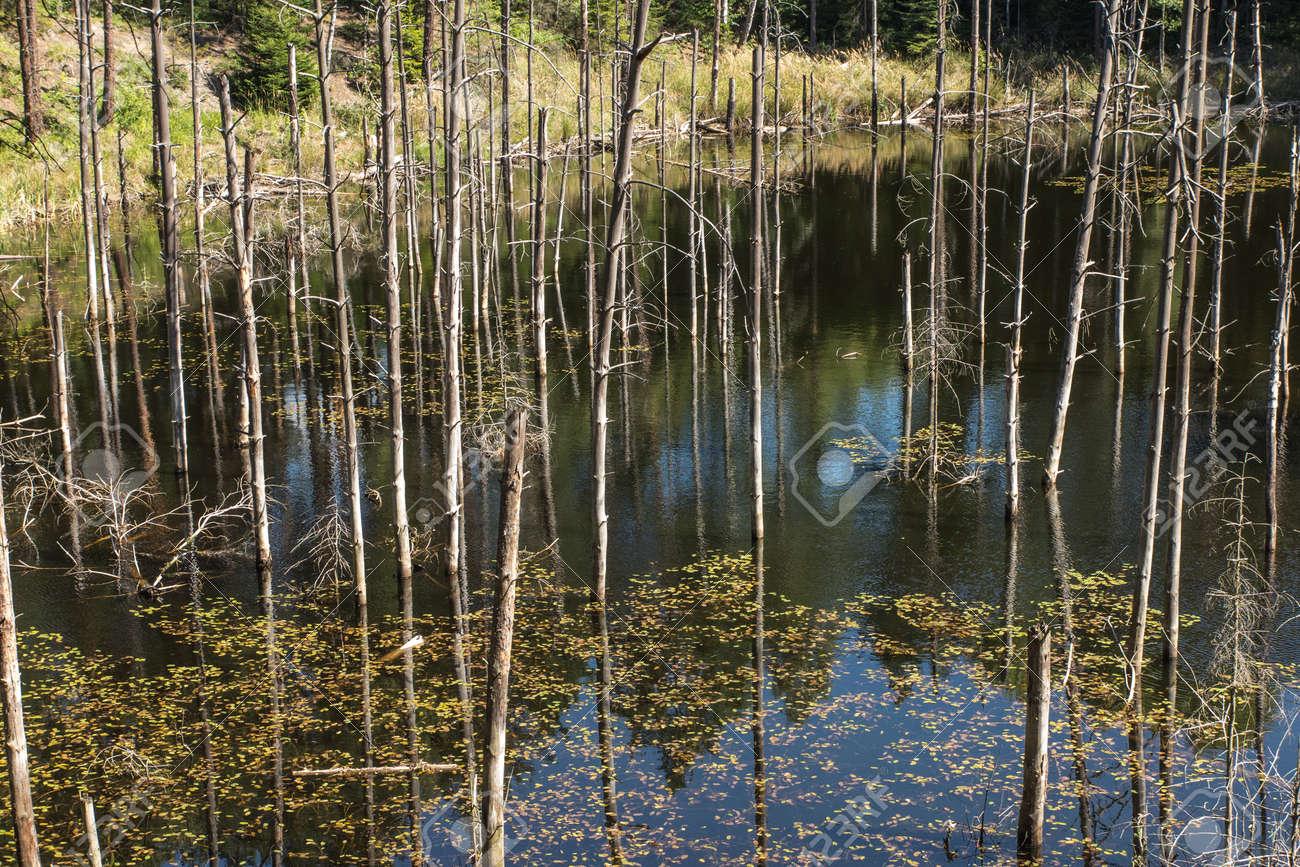 """ponds at the site of the flooded iron mine """"Pasieki"""" in Miasteczko Slaskie in Silesia, Poland - 158264267"""