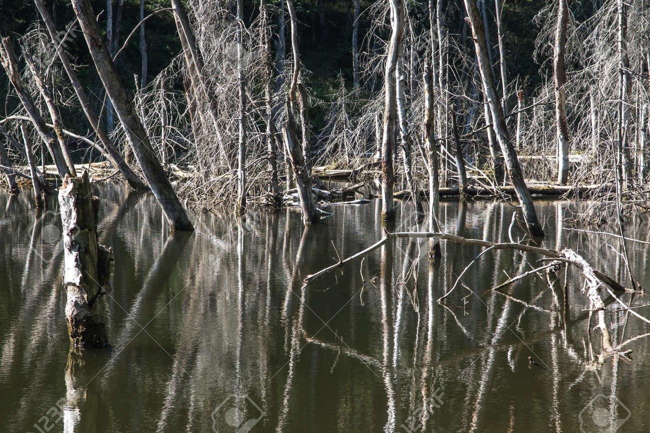 """ponds at the site of the flooded iron mine """"Pasieki"""" in Miasteczko Slaskie in Silesia, Poland - 158195409"""