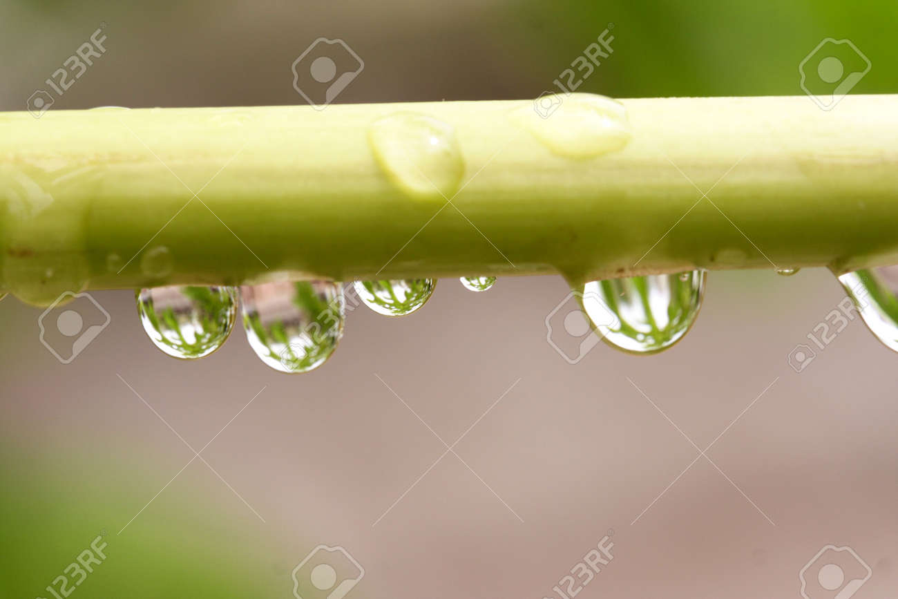 Water droplets on a stem Stock Photo - 2772522