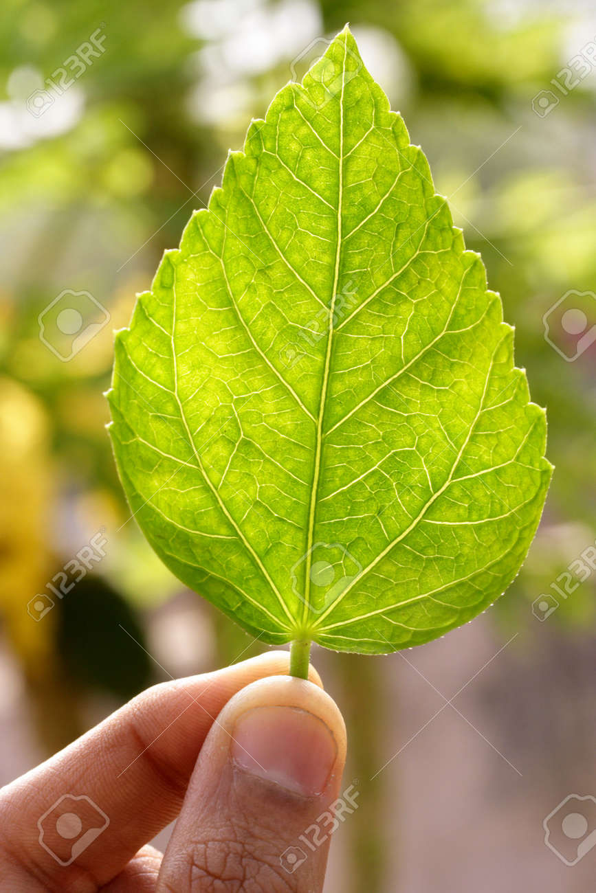 Holding a green leaf Stock Photo - 2772530