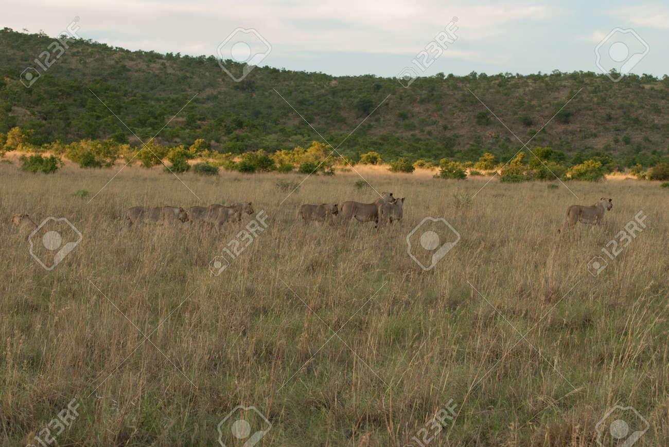 草地でピラネスバーグ国立公園南...