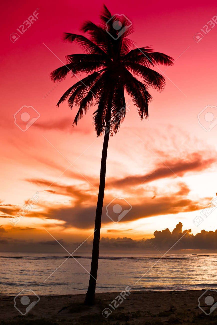 black palm on a night beach red orange sky Stock Photo - 4959879