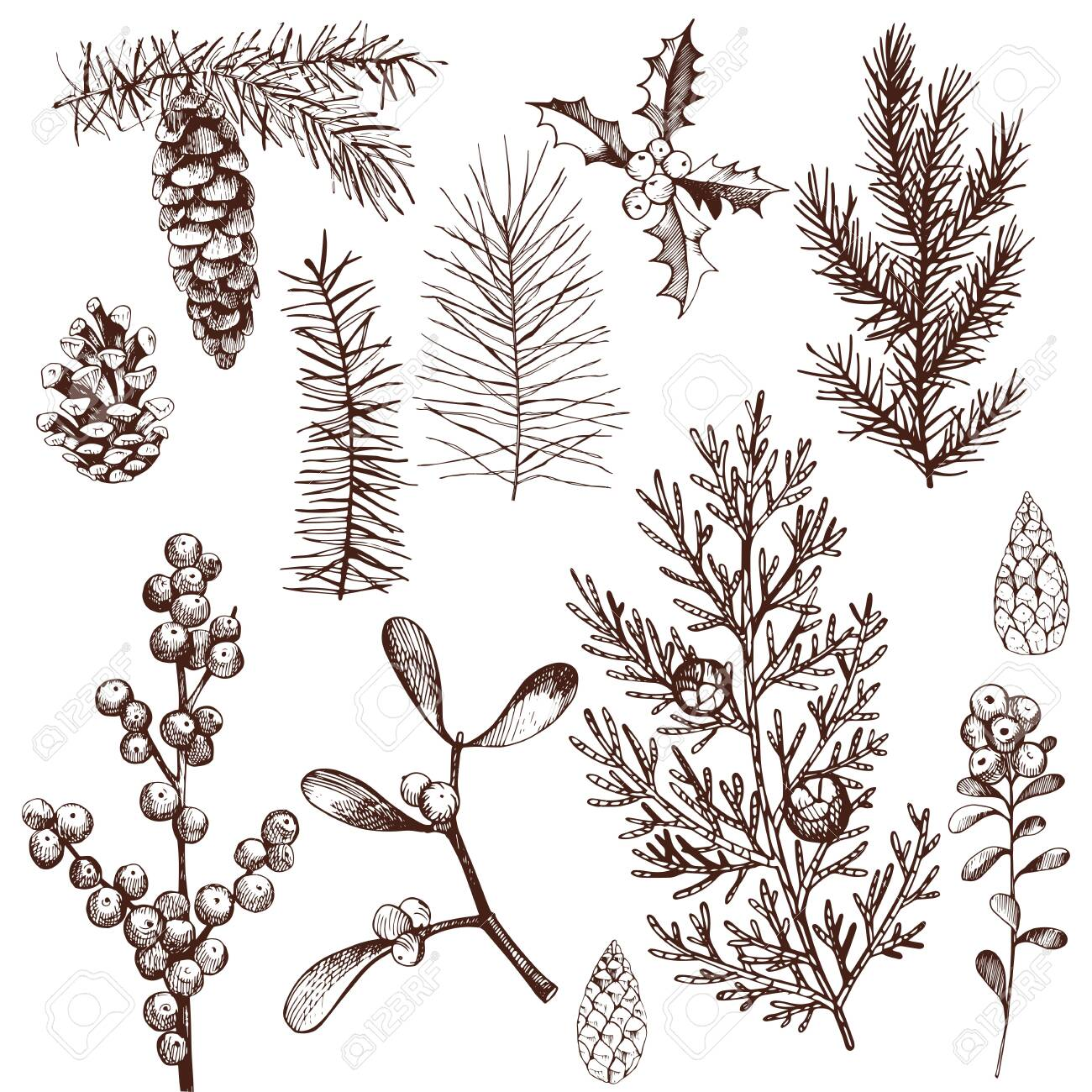 Christmas plants set. Vector hand-drawn illustration. - 153288777