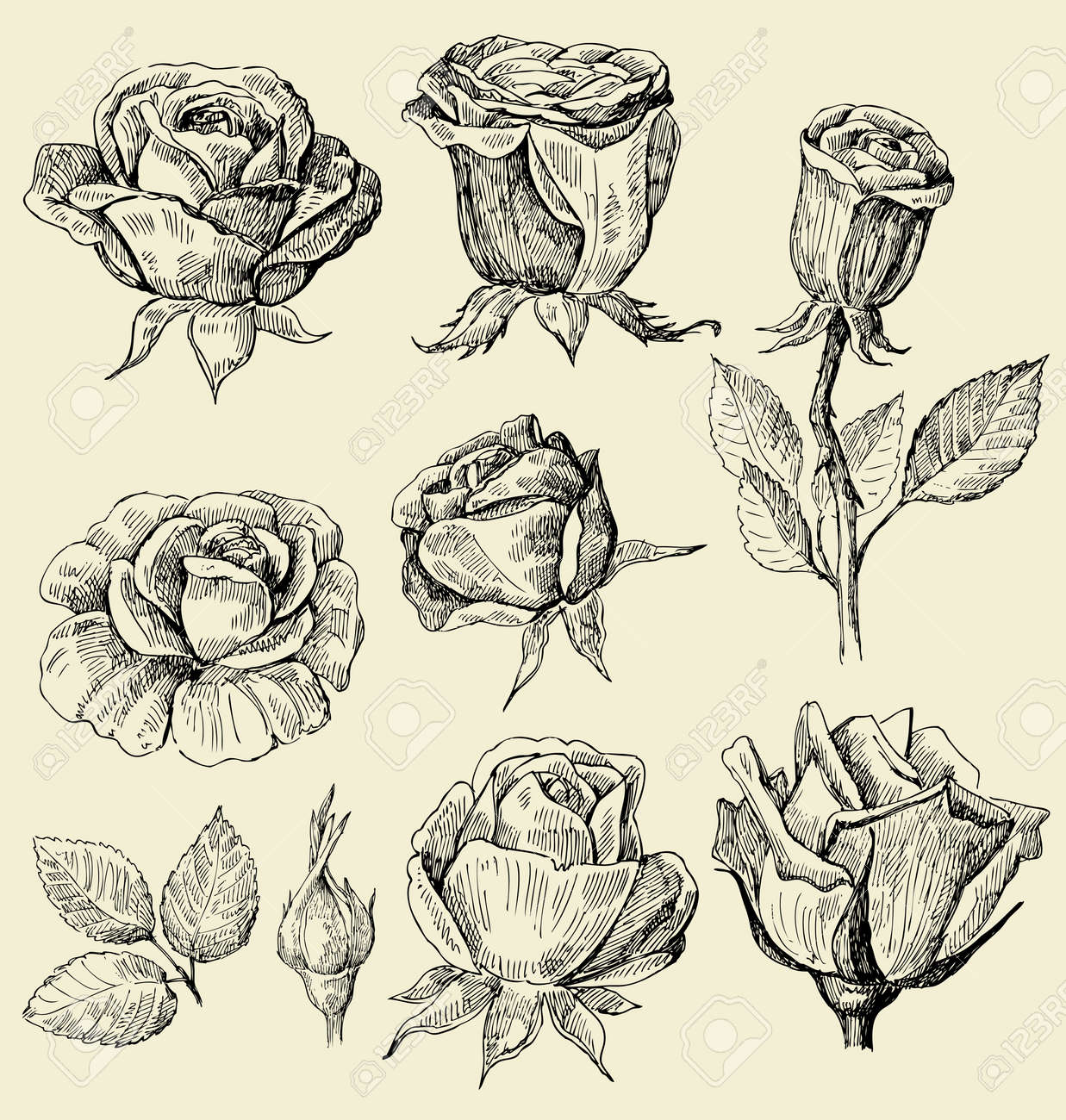 roses doodles set Stock Vector - 13638100