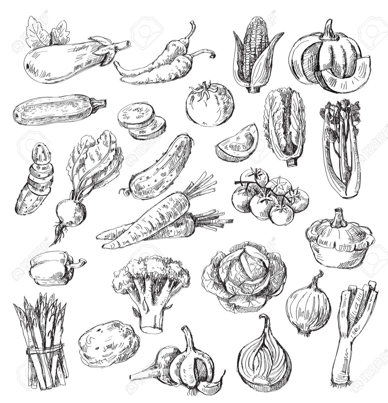 vector set of different hand drawn vegetable royalty free cliparts