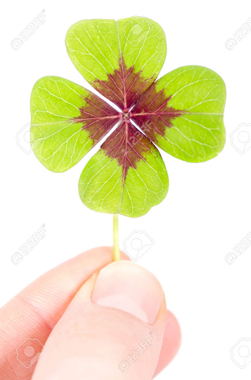 a fourleaved cloverleaf is held with two fingers Stock Photo - 12386463