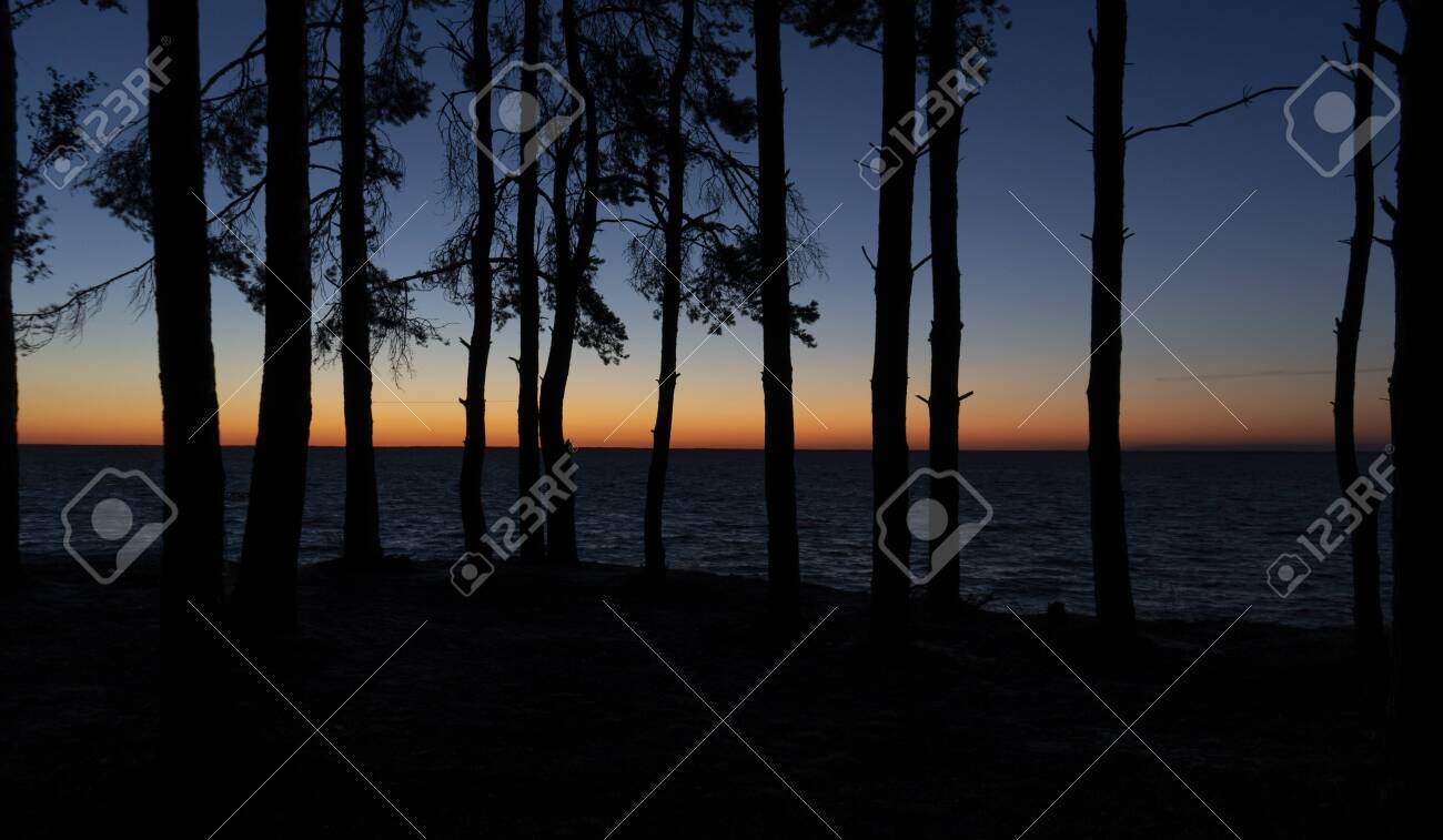 Silhouettes of trees at sunrise - 153349561