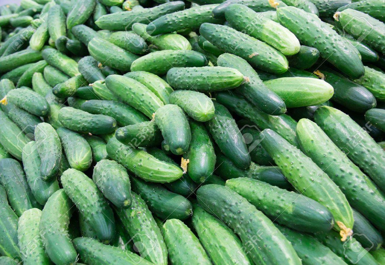 lots of fresh cucumbers  laid out on the counter on the market for sale Stock Photo - 19798370