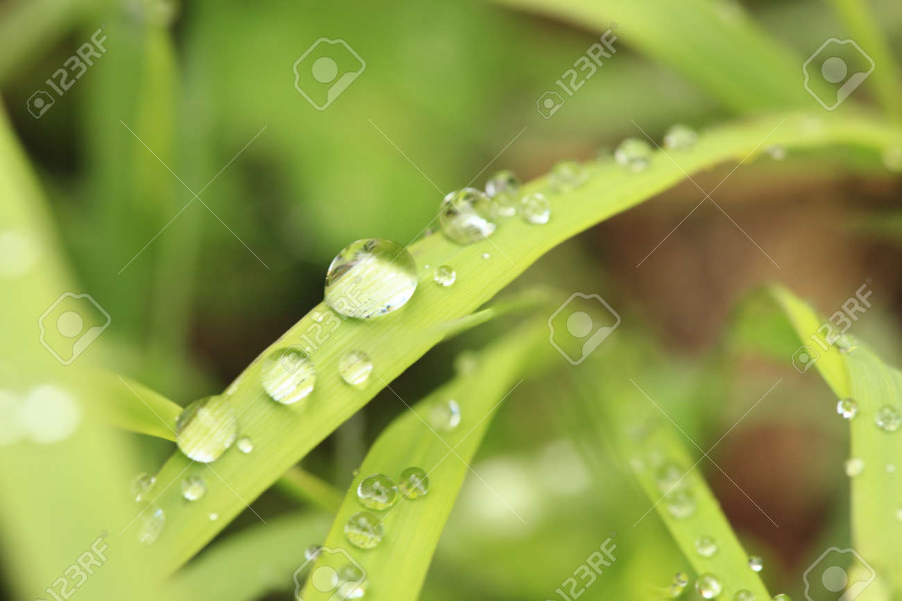 shiny raindrops on grass in nature Stock Photo - 9678419