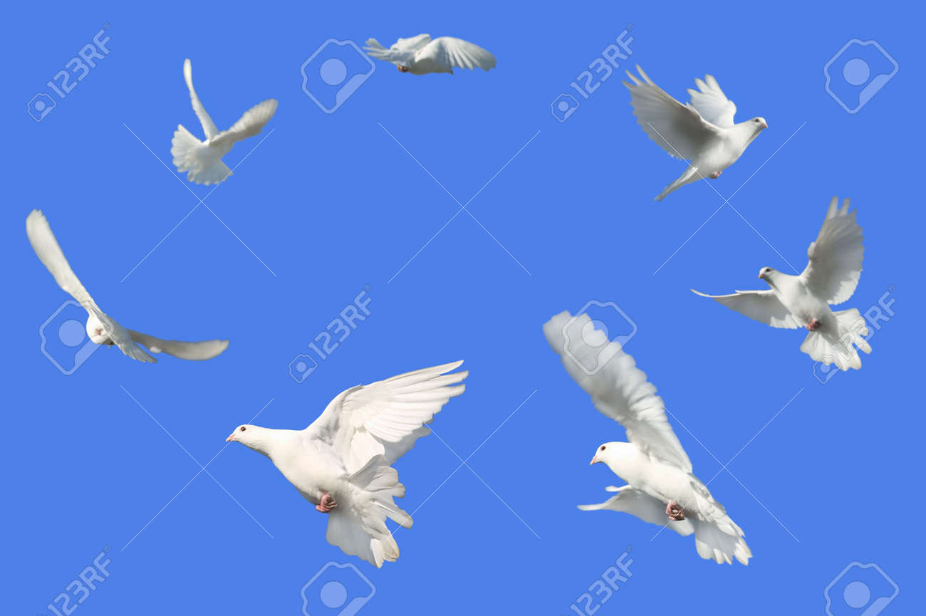 Concept image of Peace - White Dove's flying in a circle against a bright blue sky. Stock Photo - 954751