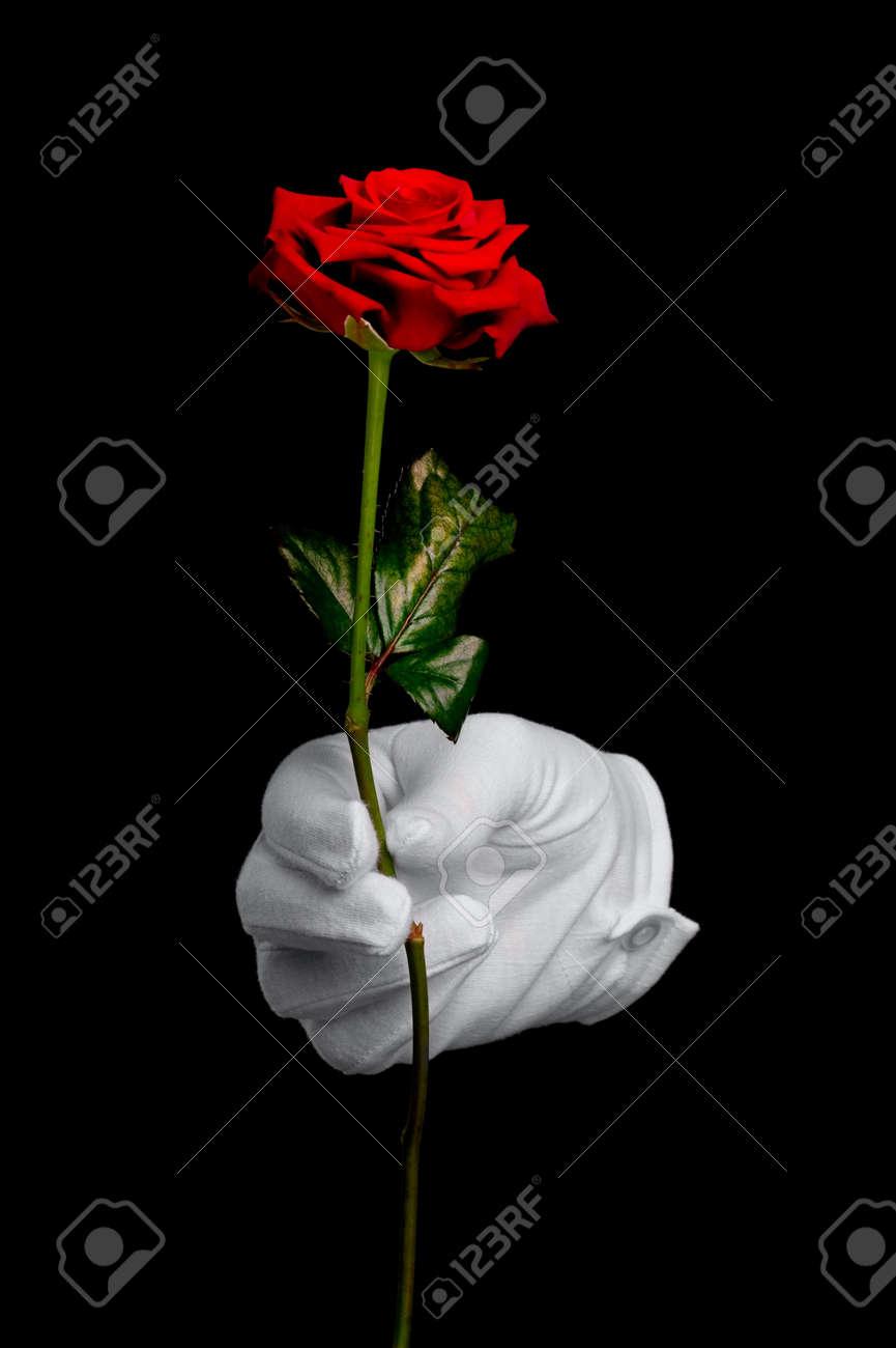 Immagini Stock Una Rosa Rossa è Presentata Da Una Mano In Un