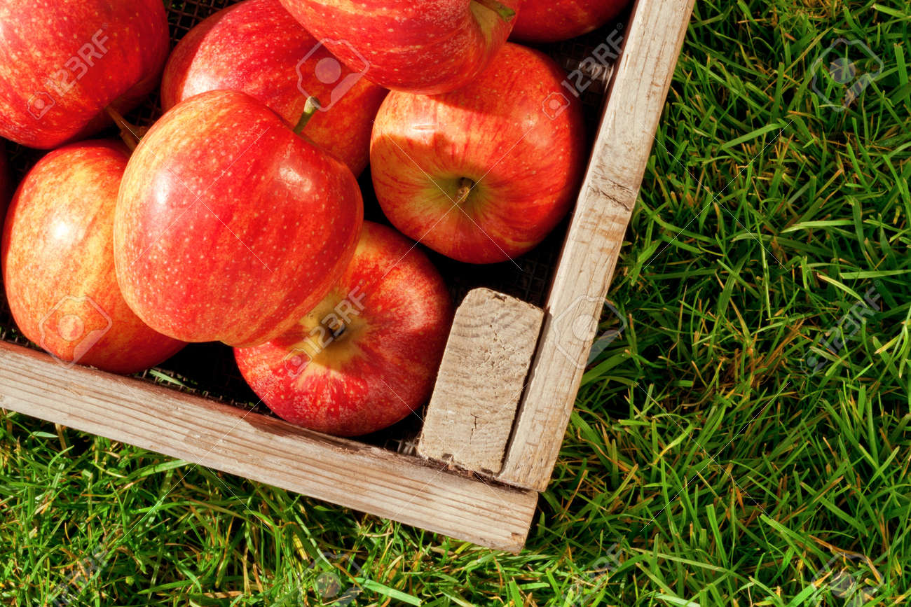 Still life photo of freshly picked red apples in a wooden crate on grass. Stock Photo - 12659090