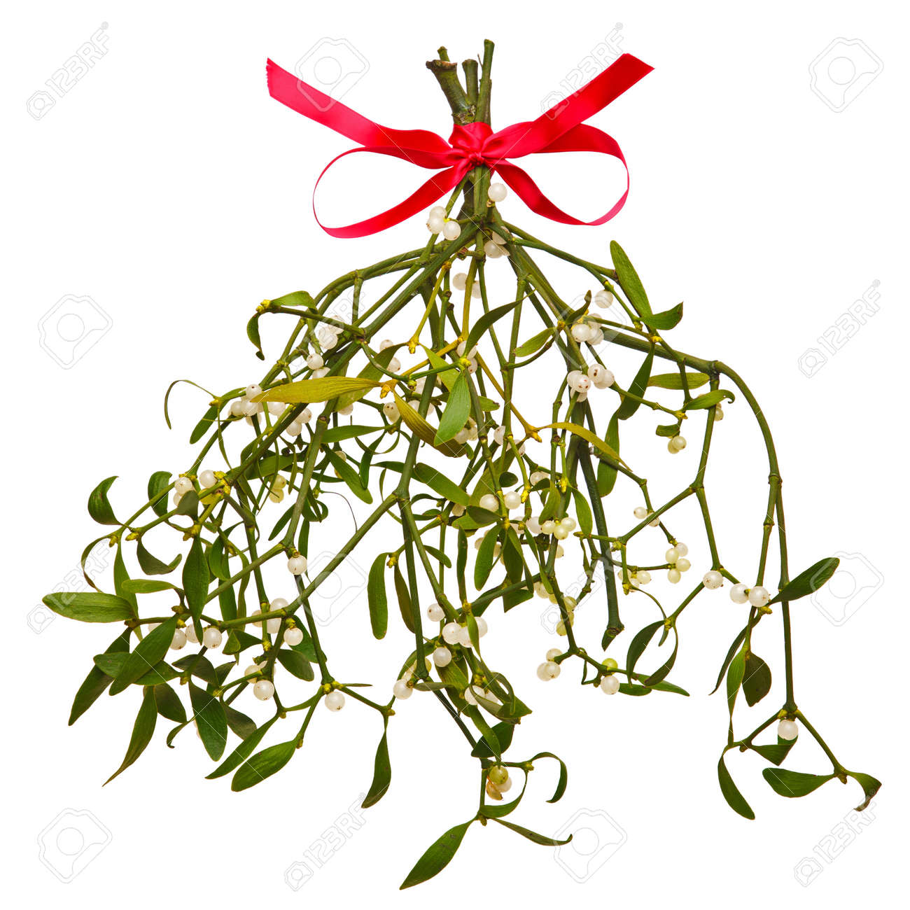 mistletoe isolated images u0026 stock pictures royalty free mistletoe