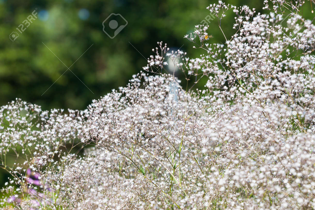 Pretty small white flowers blooming in a garden Stock Photo - 14894439