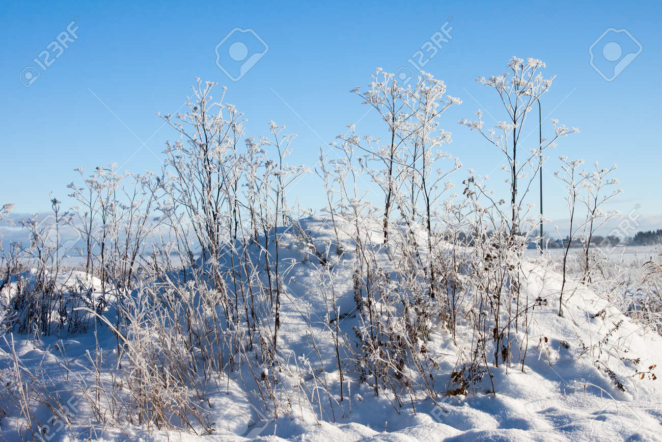 winter field landscape at fog  with grass Stock Photo - 16513640