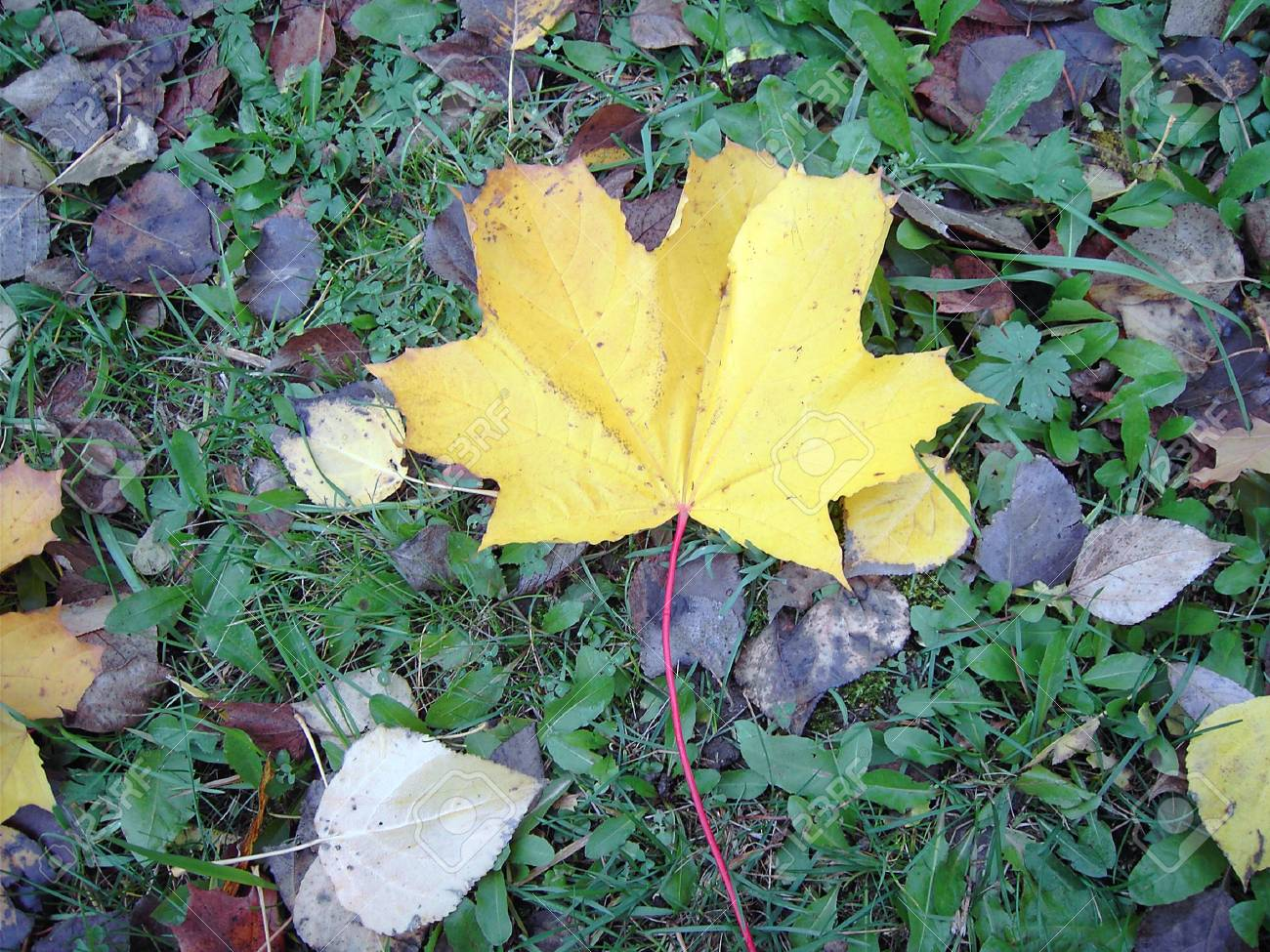 yellow leaf on earth at end of oktober Stock Photo - 2064597
