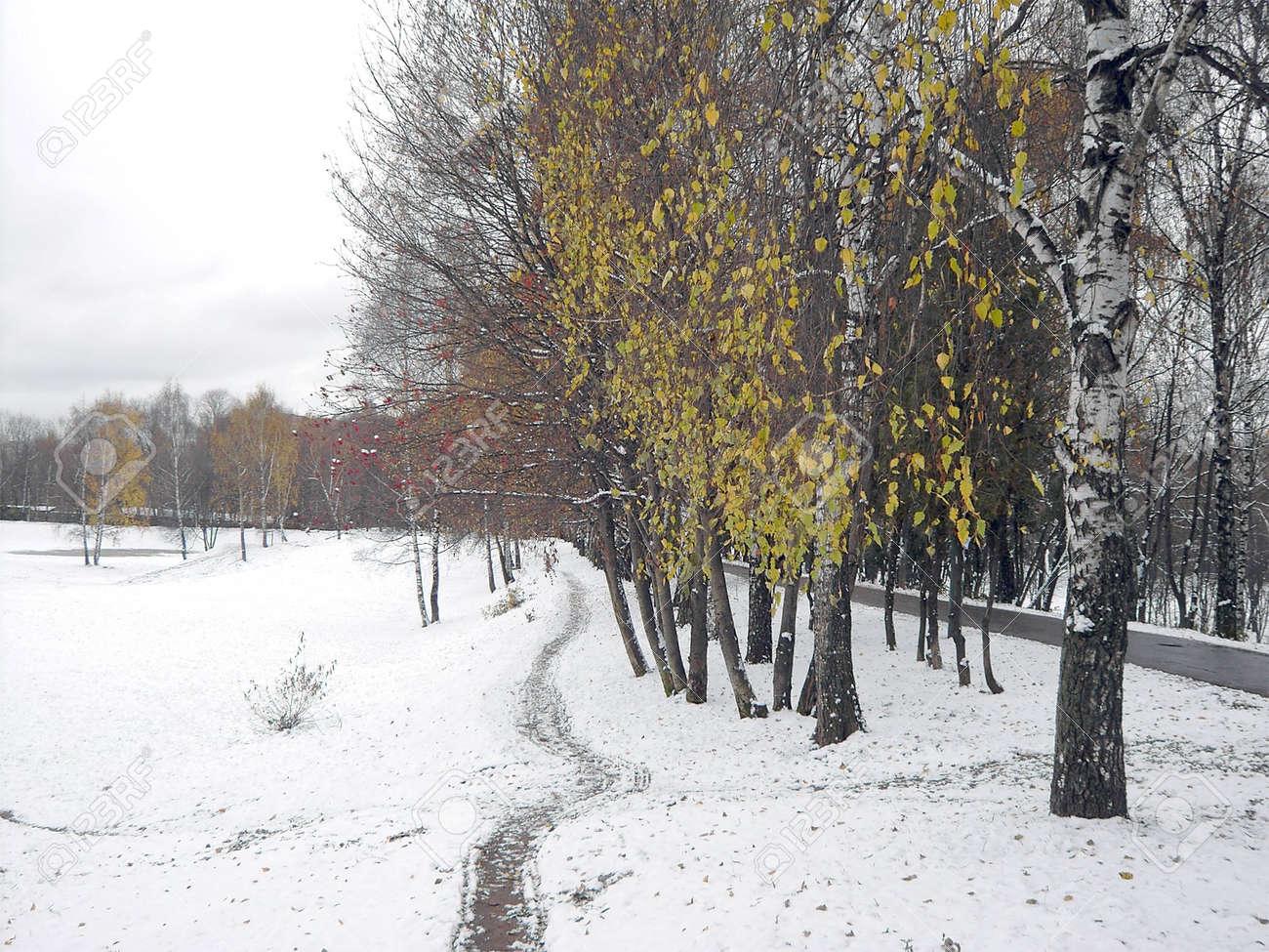 early melting snow, november, city park Stock Photo - 2108543