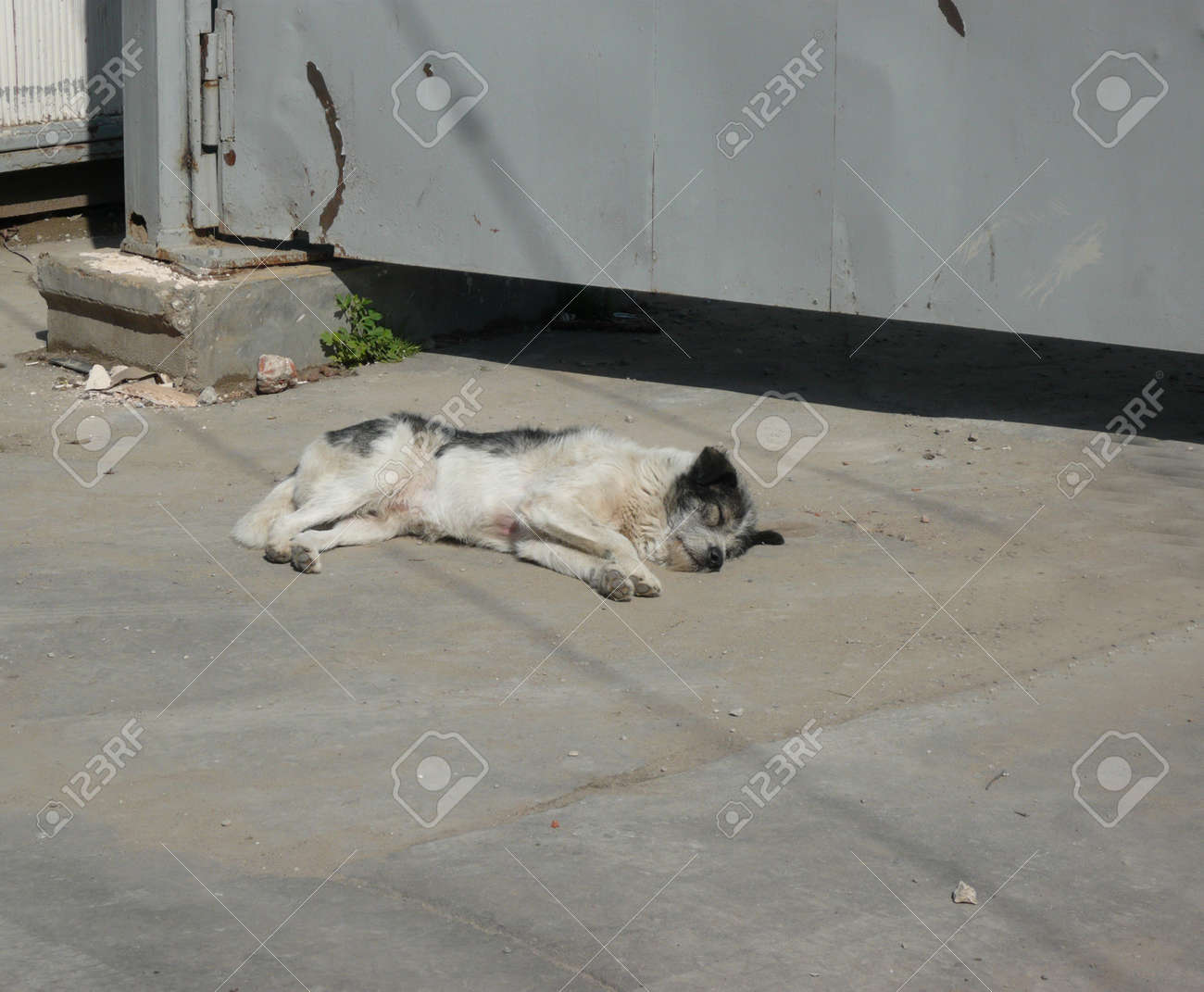 stray dogs on street at day Stock Photo - 14540099