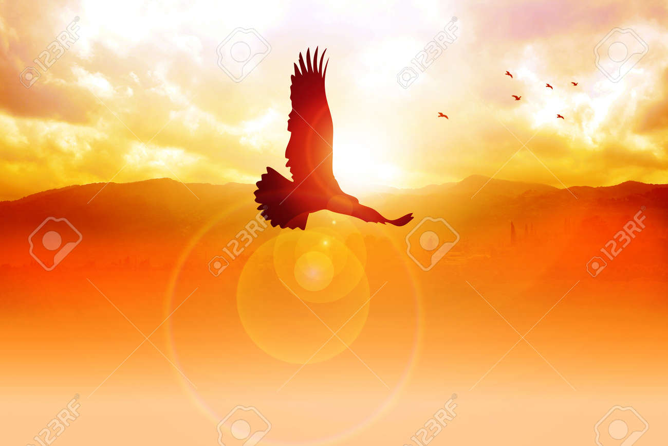 Silhouette illustration of an eagle flying on sunrise - 13089781