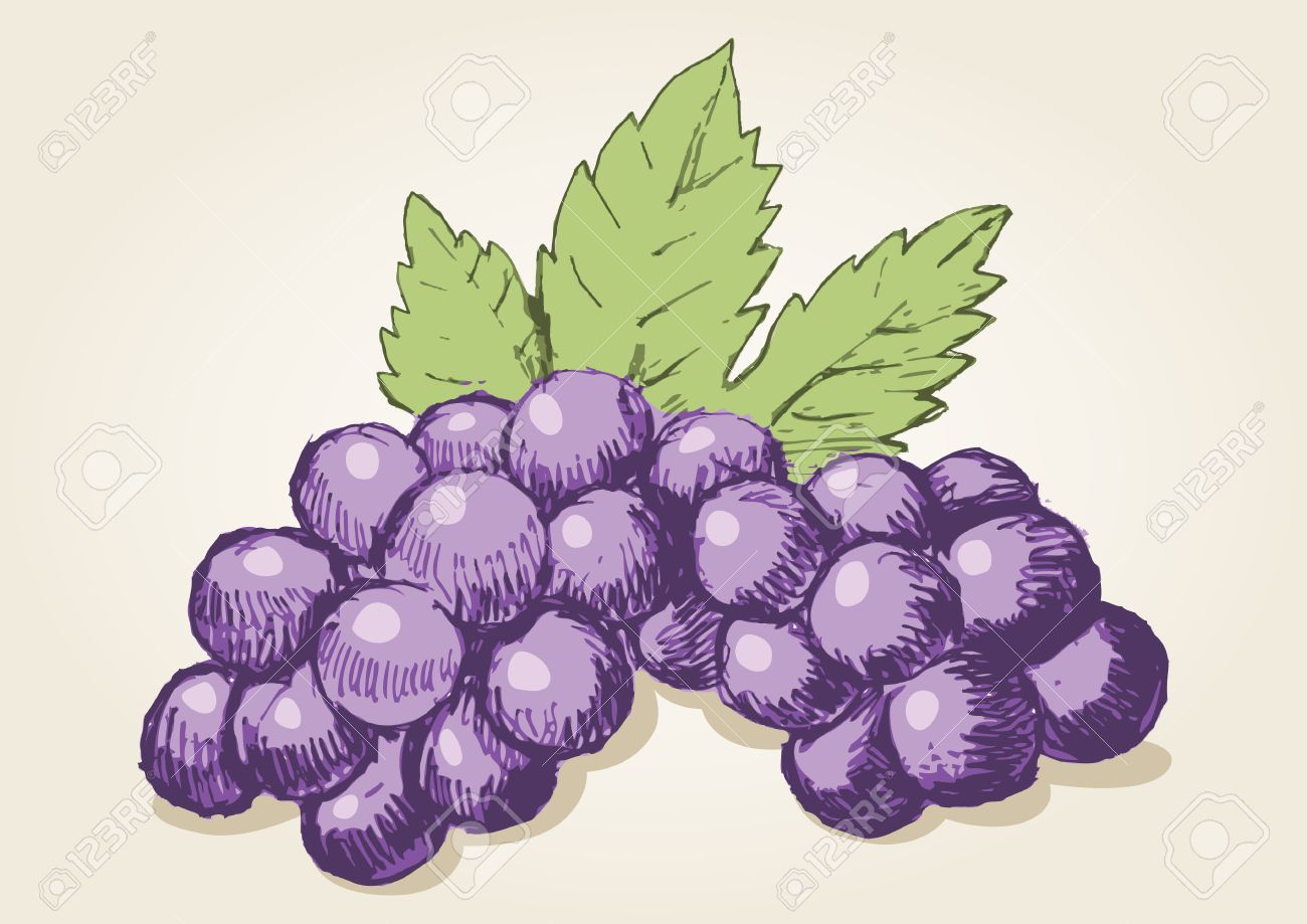 Uncategorized Drawing Grapes Sketch Of Royalty Free Cliparts Vectors And Stock Vector 28069688