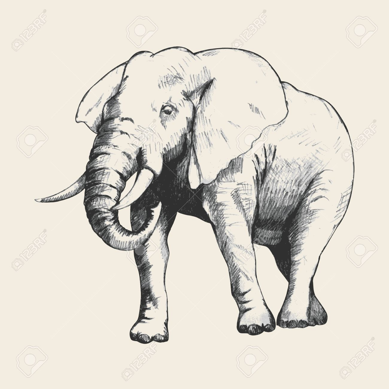 Pencil sketch of an elephant traced in adobe illustrator