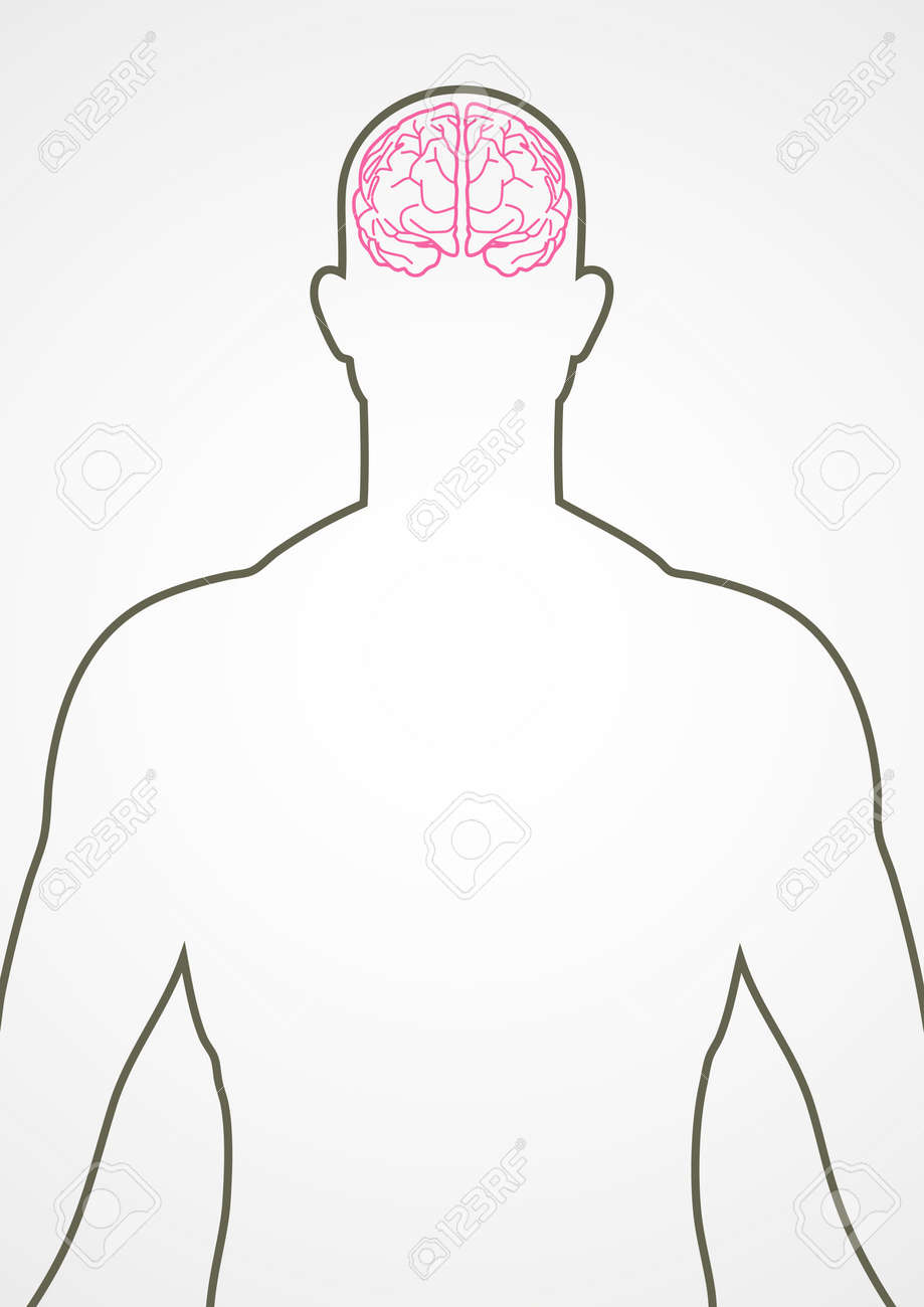 Line art of male internal organ, brain Stock Vector - 48615558