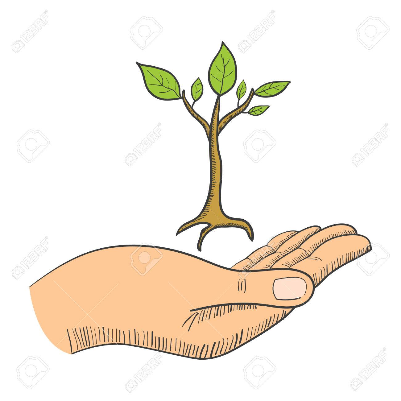 Simple Graphic Of A Hand With A Young Tree Symbol Royalty Free Cliparts Vectors And Stock Illustration Image 51855713 Free for commercial use no attribution required high quality images. simple graphic of a hand with a young tree symbol