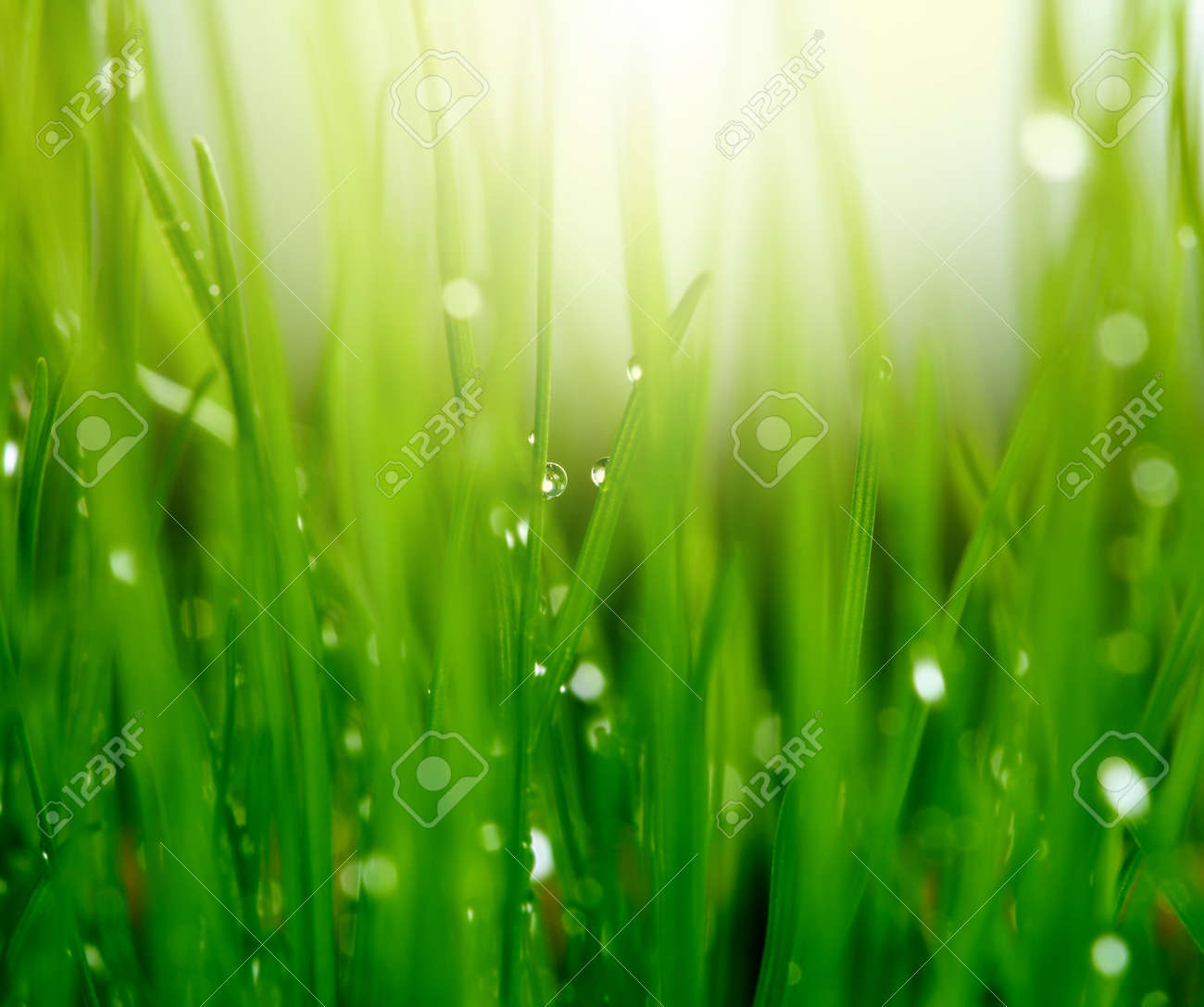 grass with water drops Stock Photo - 8348619