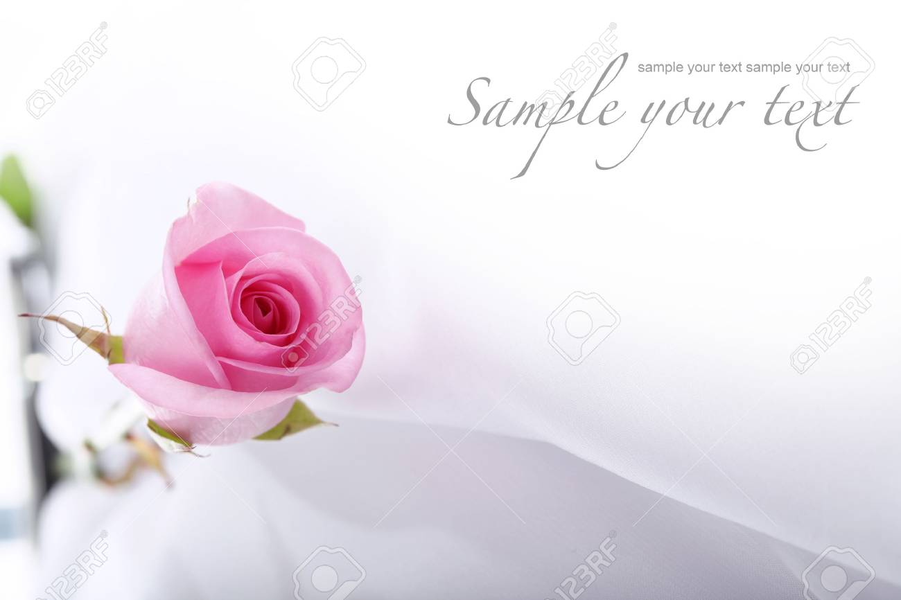 card with rose Stock Photo - 8348588