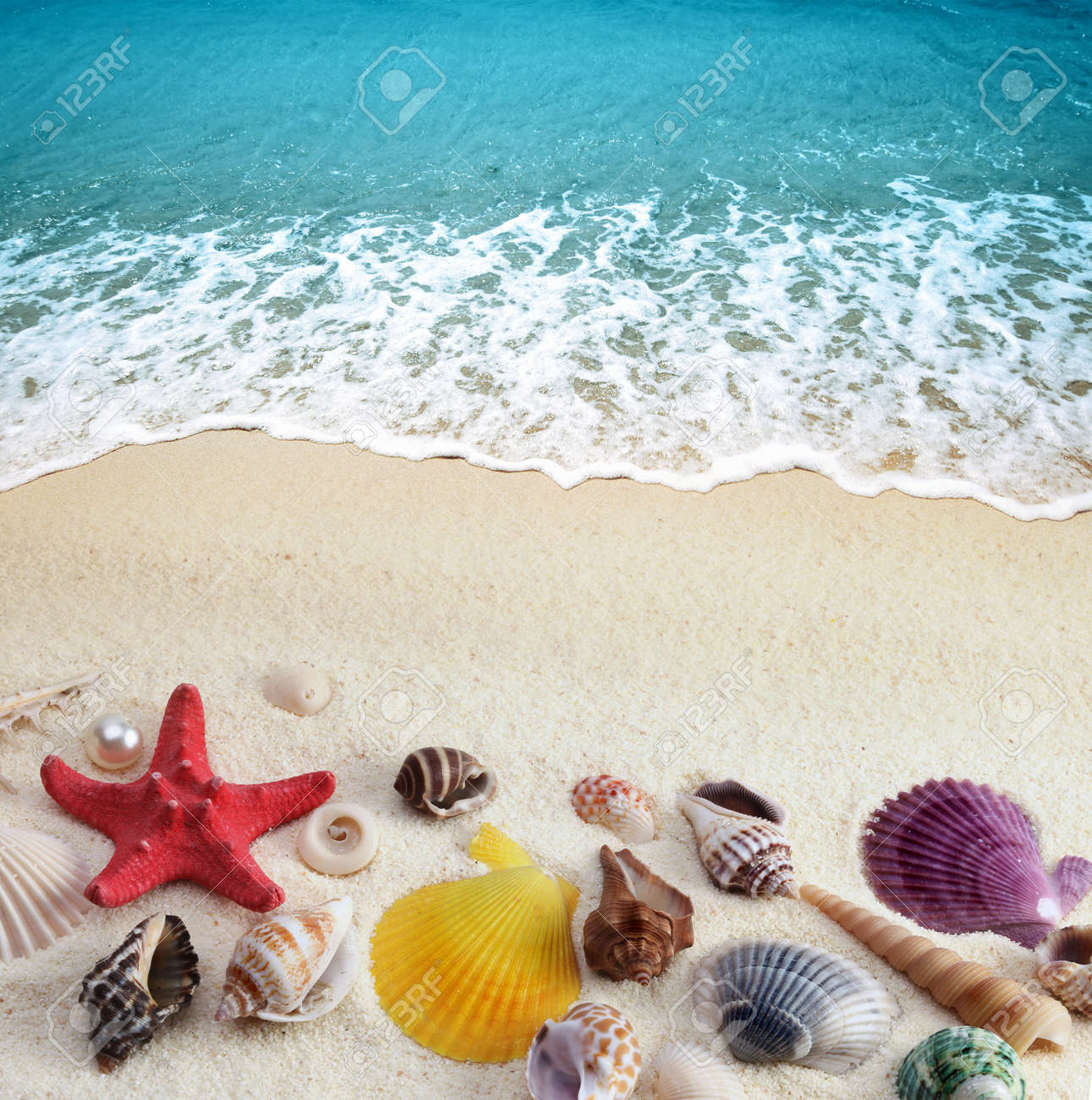 Sea Shells On Sand Beach Stock Photo Picture And Royalty Free
