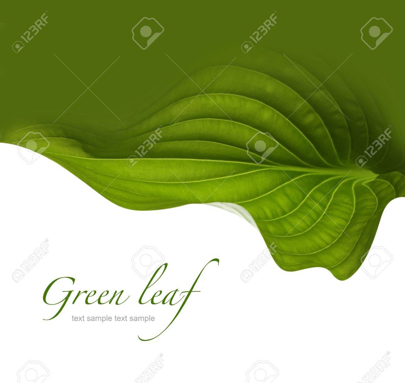 green leaf background Stock Photo - 20145273