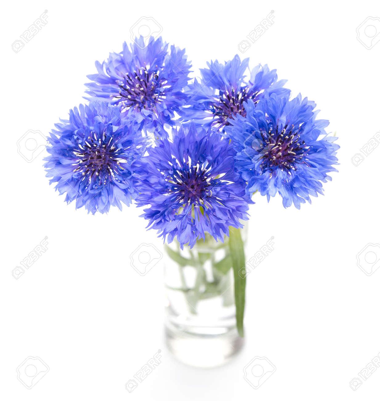 Blue Cornflower Flower Bouquet Isolated On White Stock Photo ...