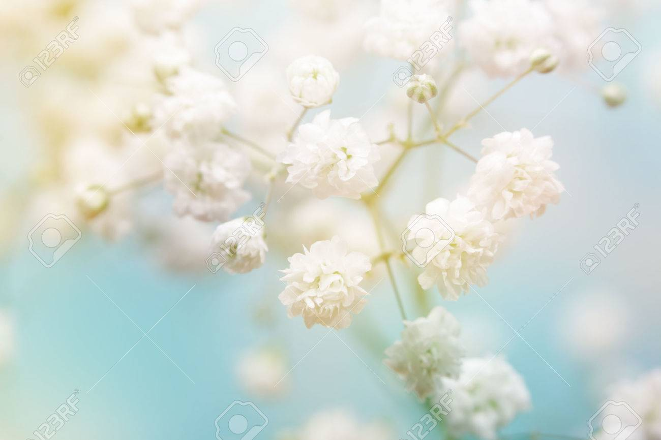 White Flower On Blue Background Soft Focus Stock Photo Picture
