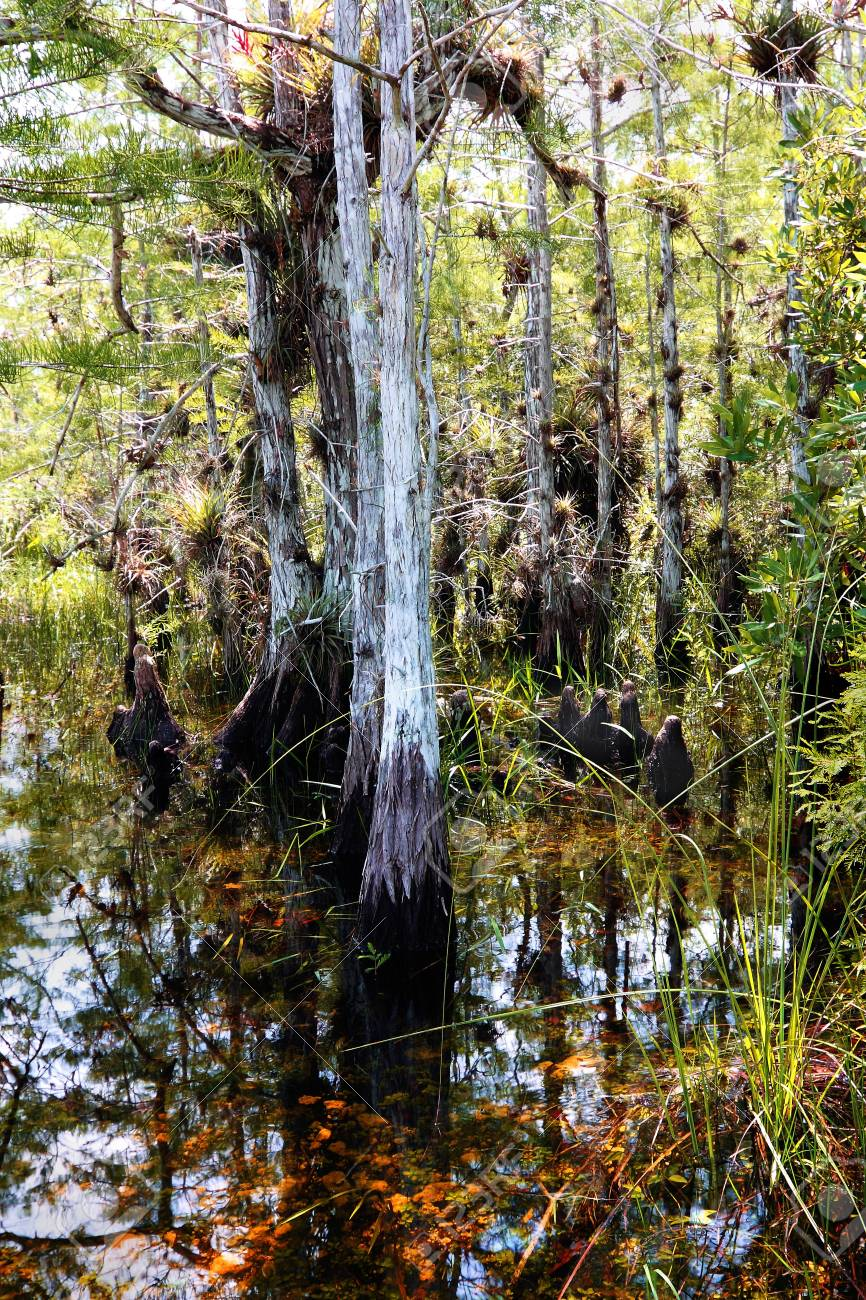 Florida Everglades Landscape 4 Stock Photo - 5128532