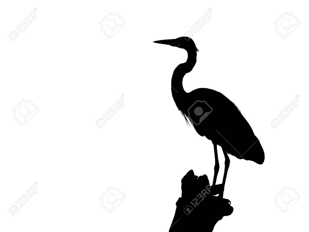 Heron Silhouette isolated  on white Stock Photo - 5409190