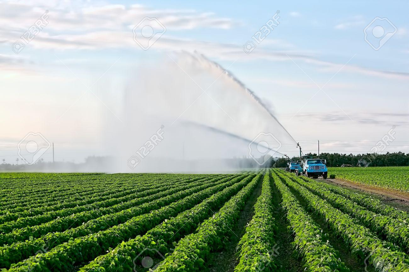 作物の品質を確保する農地の灌漑...
