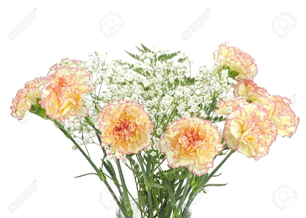Beautiful Bouquet Of Carnations The Flower Of Love With Gypsophila