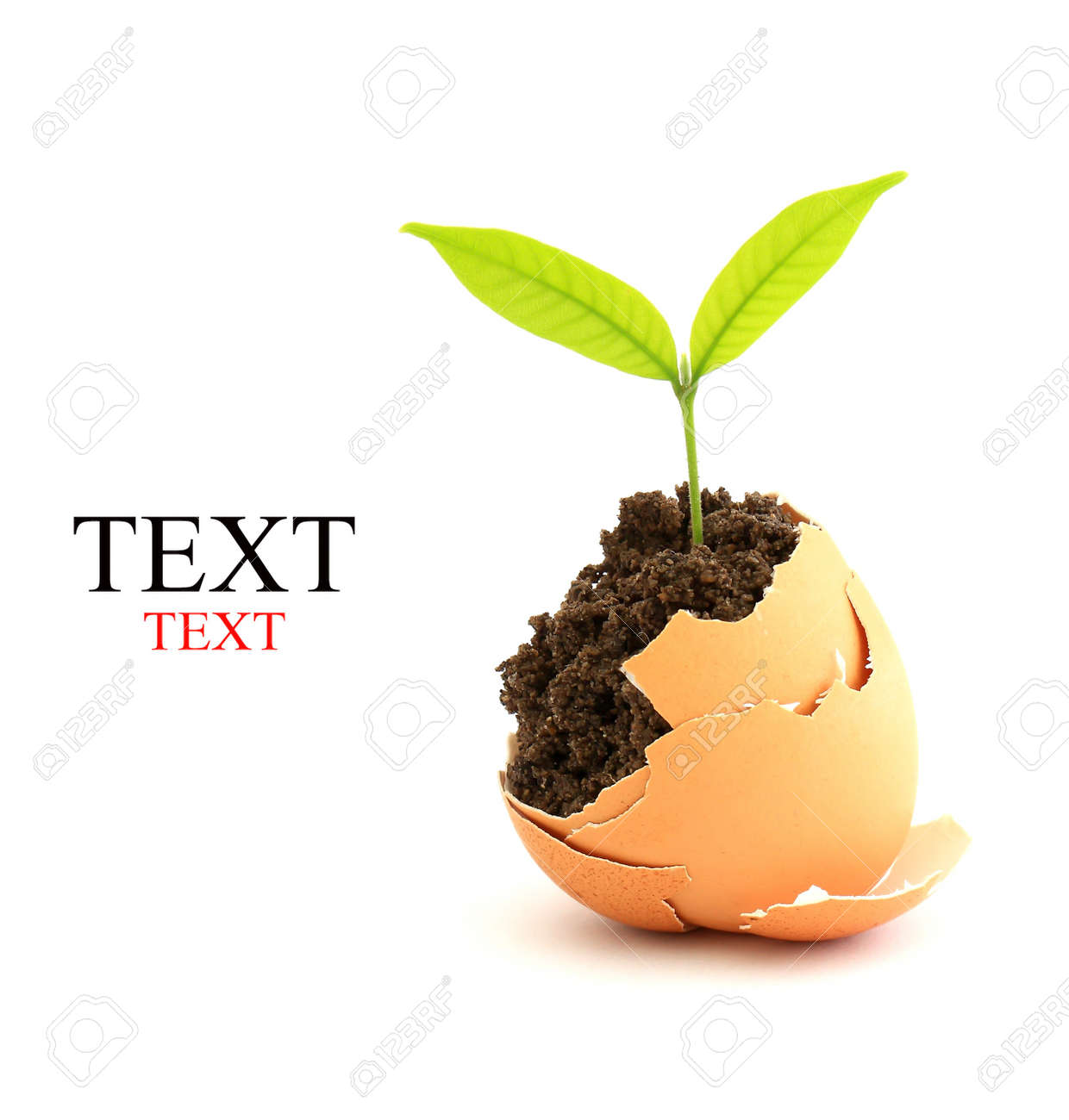 growing green plant in egg shell on white background - 9347854