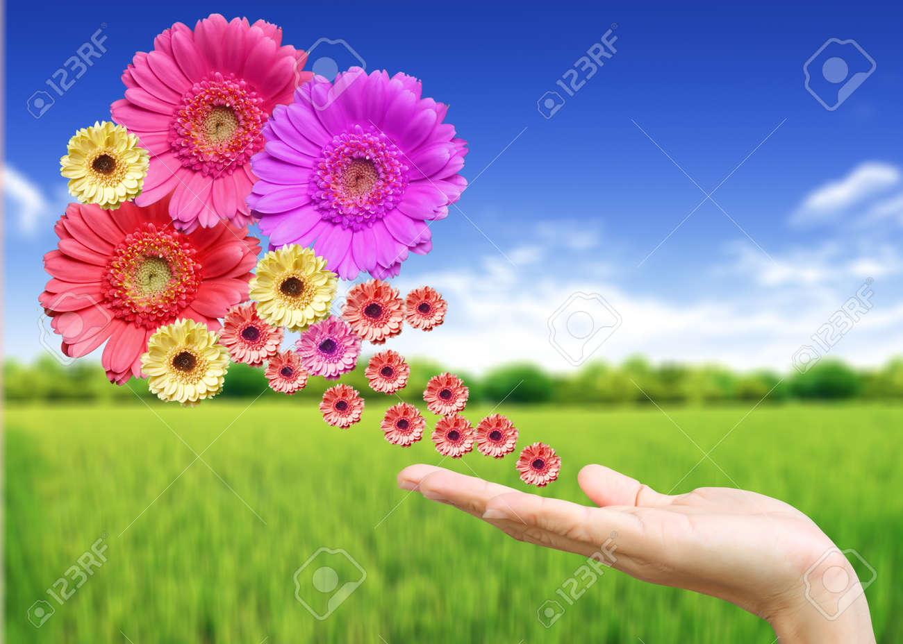 Woman's hand with flowers Stock Photo - 9904993