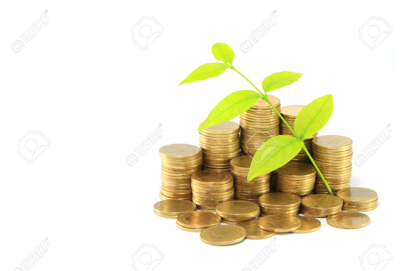 Gold coins and plant. On a white background Stock Photo - 14208366