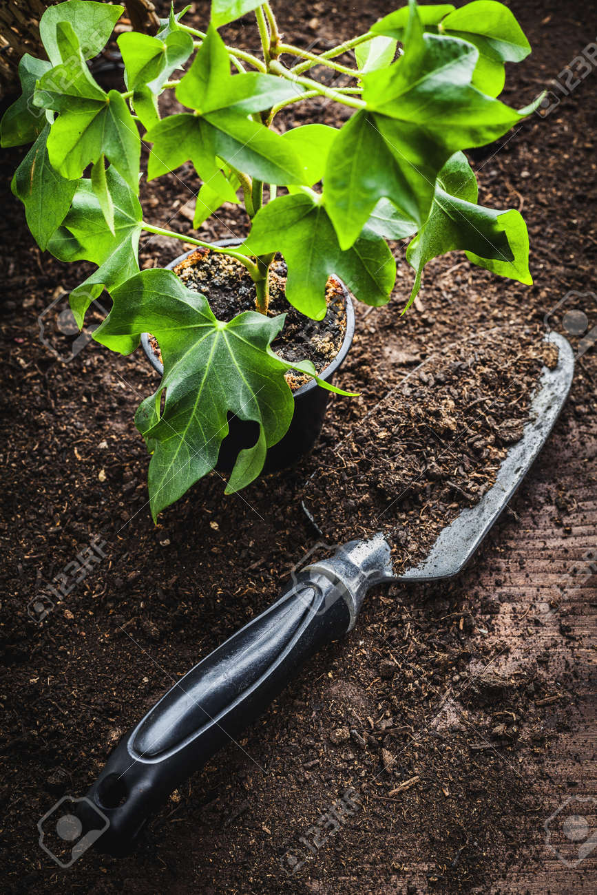 small potted seedling Stock Photo - 16538958