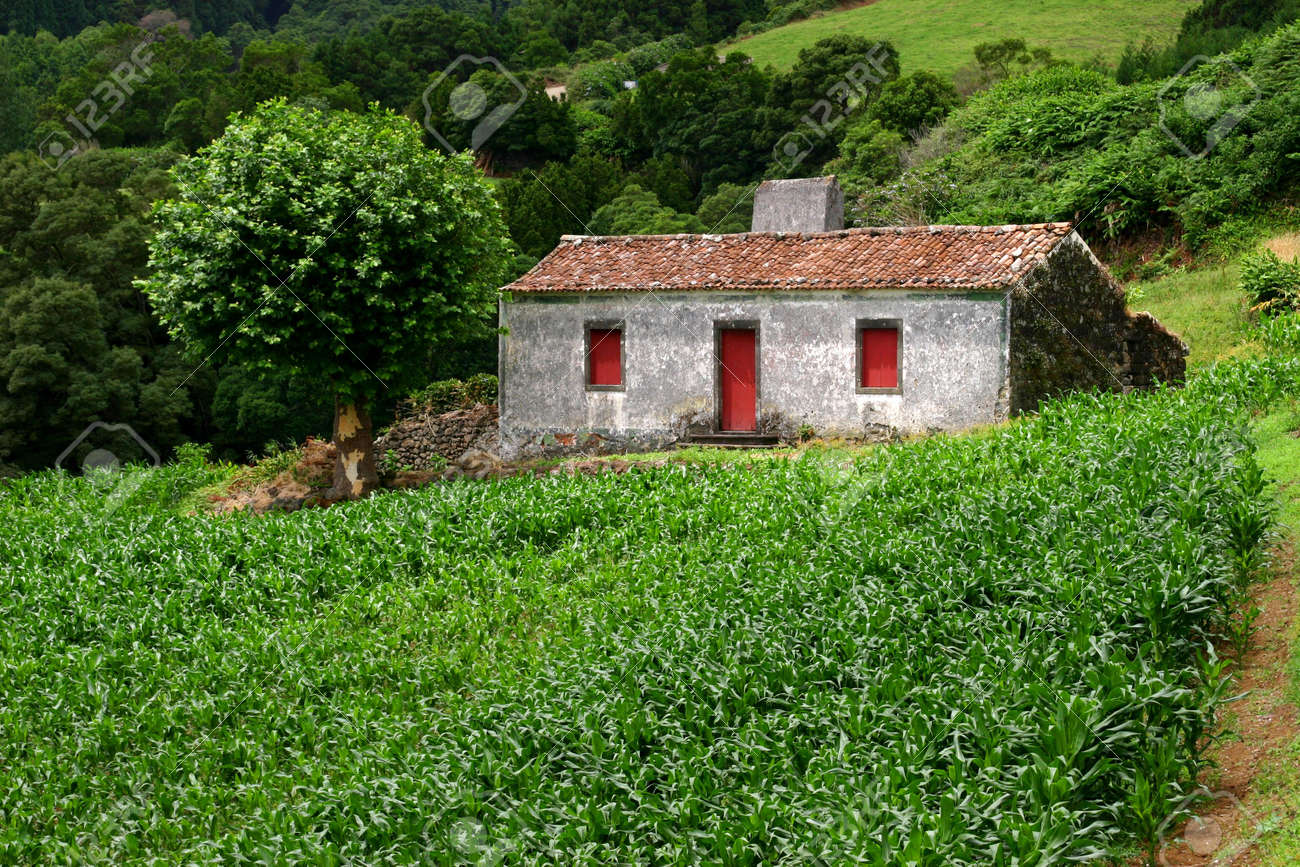 farm house with a field of corn in azores Stock Photo - 1998072