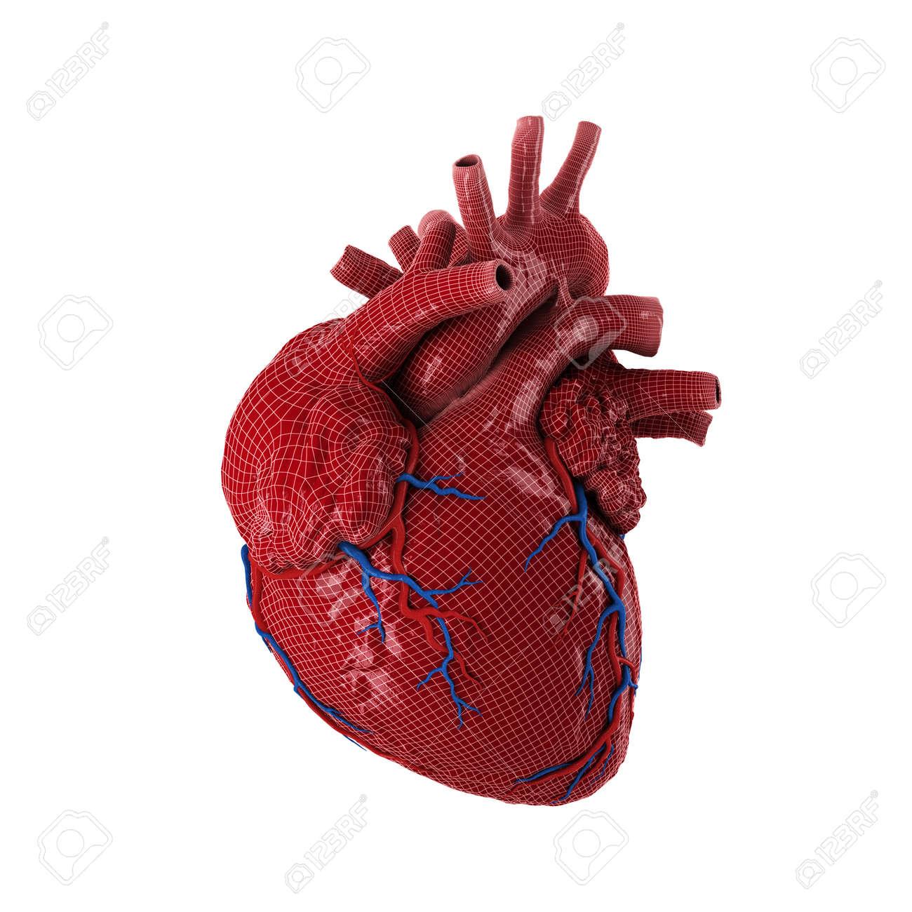 Coeur Humain Photo 3d a rendu le coeur humain isolé sur fond blanc. banque d'images et