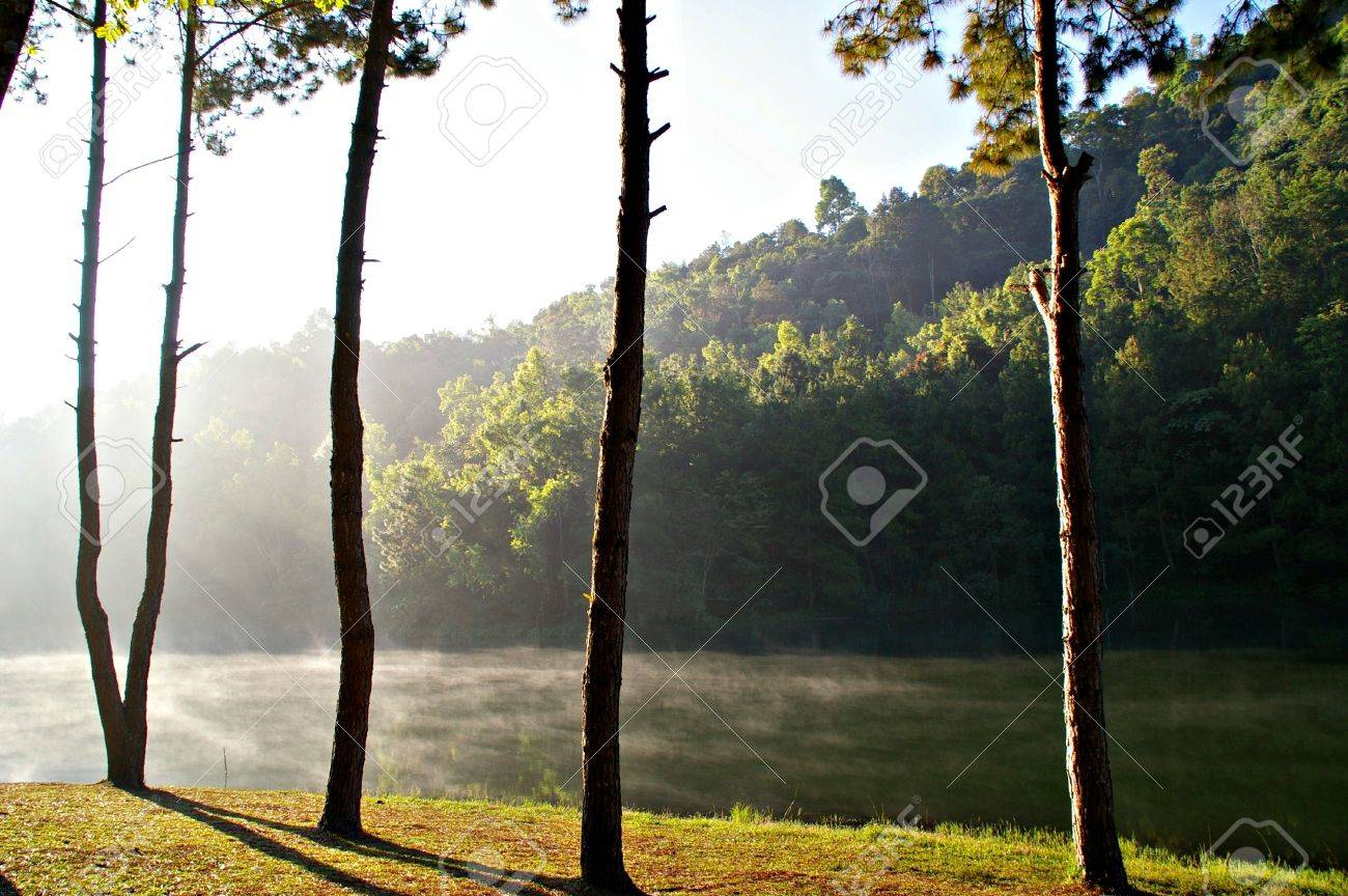 natural lakes in pine forest , Northern of Thailand Stock Photo - 16280279