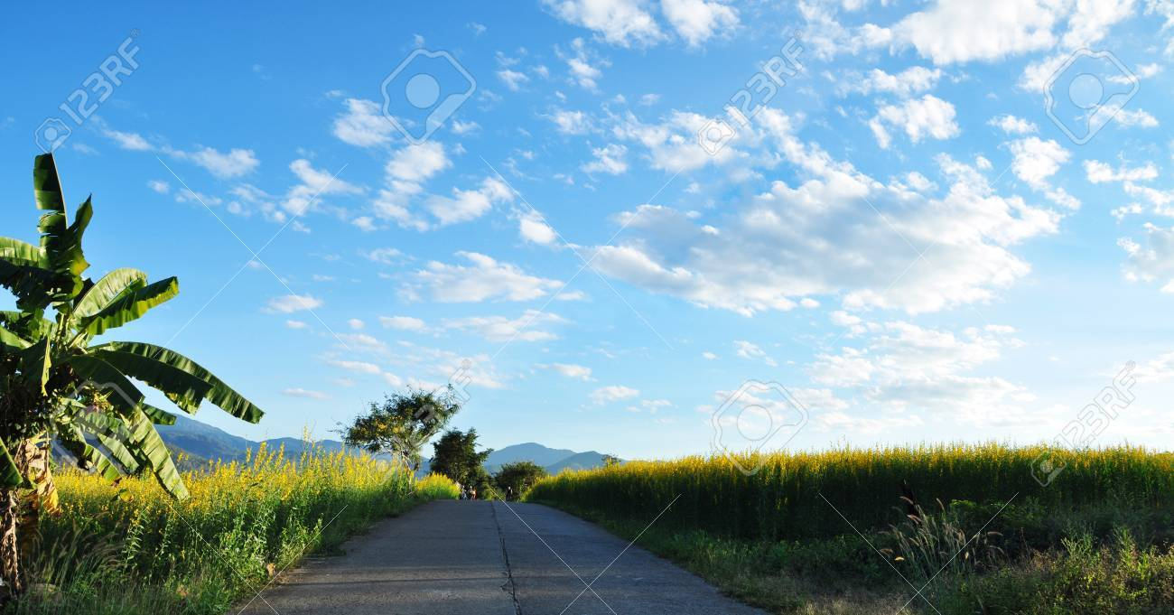 Flowering indian heam along the side of the road at Pai Stock Photo - 16836497