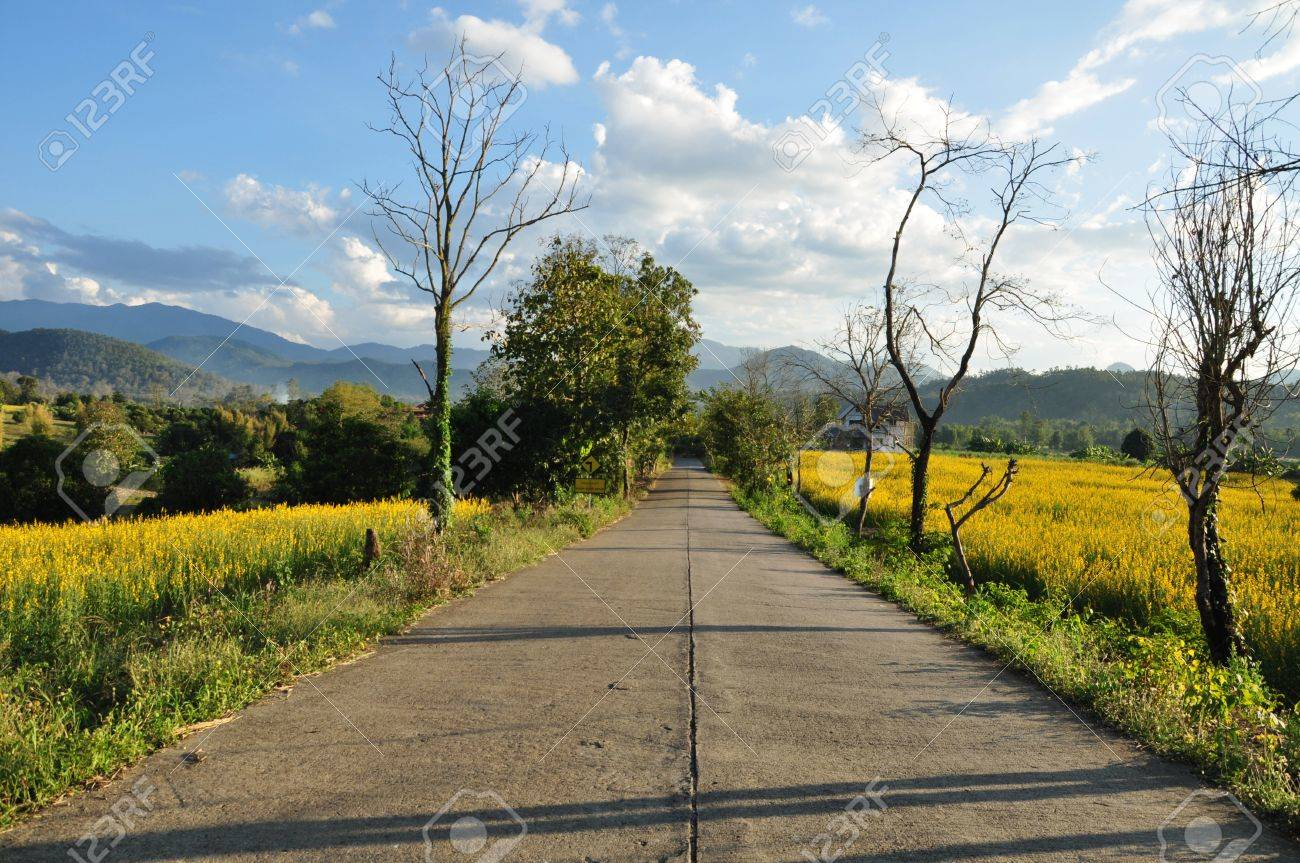 Flowering indian heam along the side of the road at Pai Mae Hong Son Province  Northern Thailand Stock Photo - 16857175