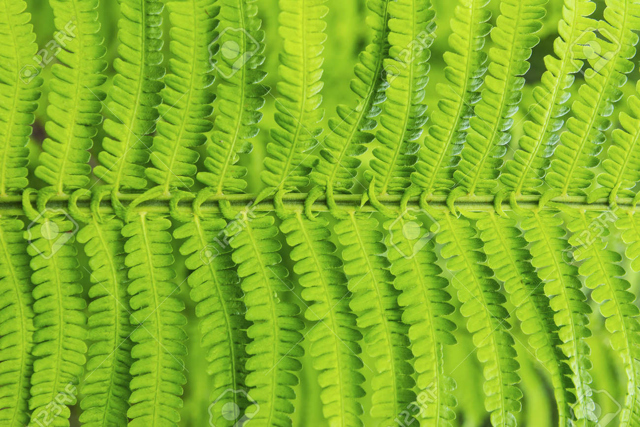 Beautiful structure of branch plant Stock Photo - 14839692
